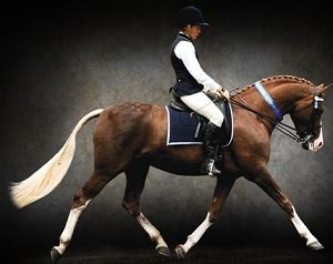 Babydoll Embrio Top select breeders services stallion freezing and equine reproduction services