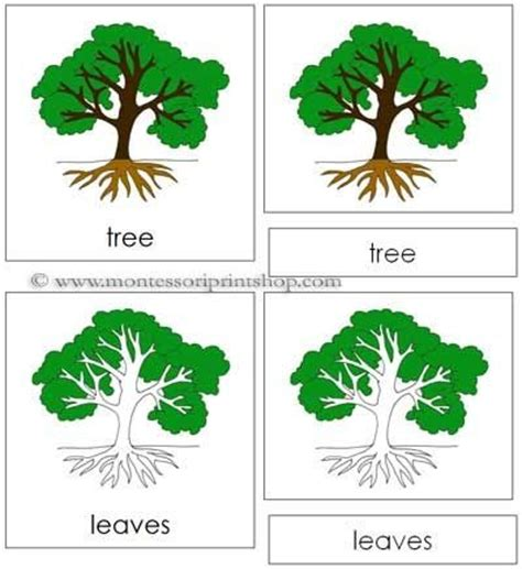printable montessori flashcards tree nomenclature cards printable montessori