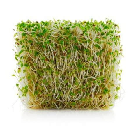 Sprout 1 7 End alfalfa sprouts pictures to pin on pinsdaddy