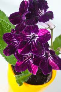 plants to grow indoors add some color 5 cheery easy to grow indoor flowering