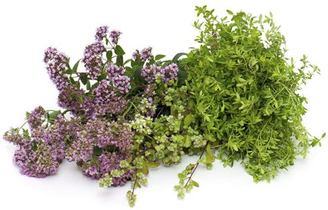 different oregano substitutes to use based on the type of dish