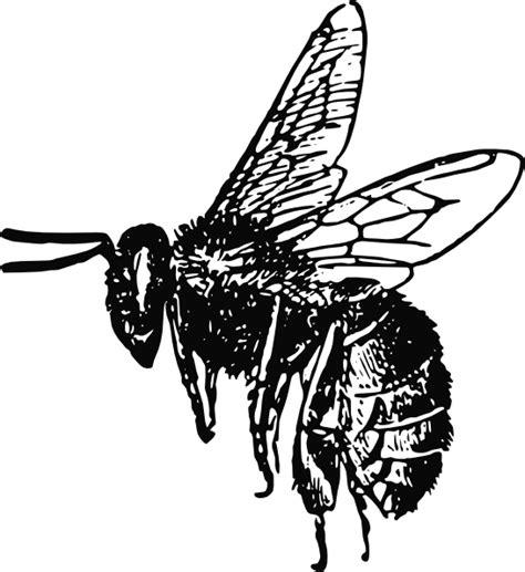 bee clip art at clker com vector clip art online