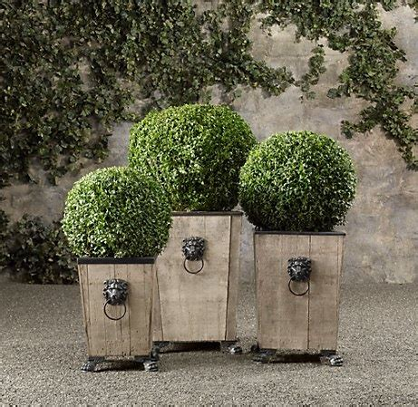 17 best ideas about boxwood topiary on formal