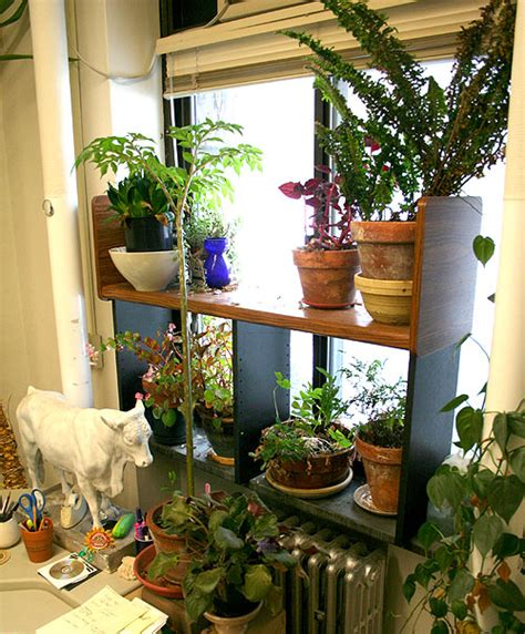 north window plants my name is craig and i have a houseplant problem ellis
