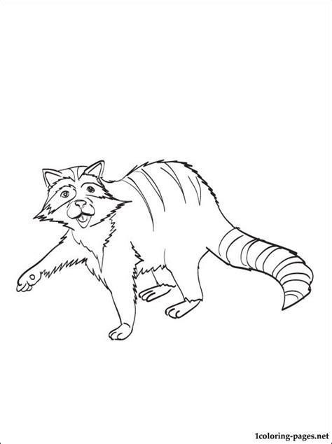 raccoon coloring book pages coloring pages