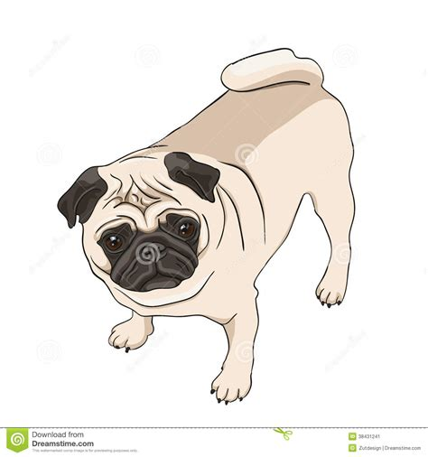 pug illustration pug illustration stock image image 38431241
