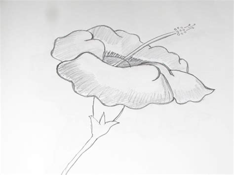 sketchbook how to draw pencil sketch of flowers how to draw and sketch hibiscus
