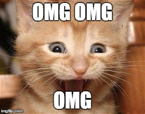 Omg Cat Meme - image gallery omg excited cat
