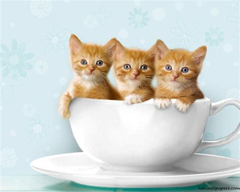 wallpaper cute kitty free cute kitten wallpapers wallpaper cave