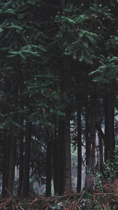 papersco iphone wallpaper nh wood forest dark night