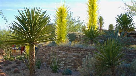 Desert Botanical Garden by Desert Botanical Garden In Arizona Expedia