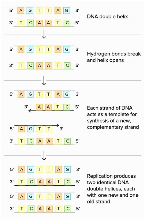 dna coloring transcription and translation restriction enzyme worksheet answers briefencounters