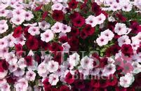 Garten Und Pflanzen Katalog by Sixtus Blumen Balkon Und Garten Pflanzenkatalog