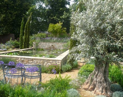 old olive tree with mediterranean planting and raised pond by claudia de yong designs www