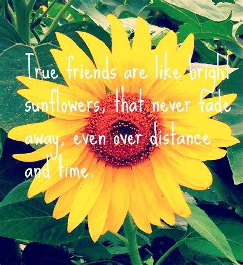 wednesday words  wisdom friends   sunflowers