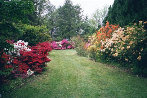 kinney azalea gardens