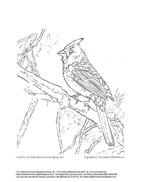 winter cardinal coloring page christmas cardinal coloring pages in snow grig3 org