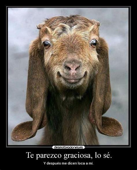 Cabra Meme - im 225 genes y carteles de cabra pag 12 desmotivaciones
