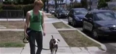 how to your to walk without a leash how to your to walk calmly and without pulling on a leash 171 dogs