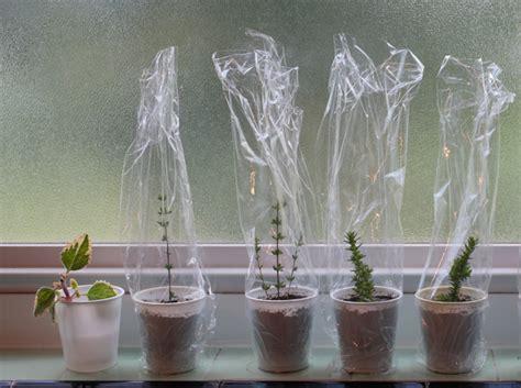 Stecklinge Herstellen by 10 Ideen Wie Sie Wurzelhormon F 252 R Stecklinge Selber