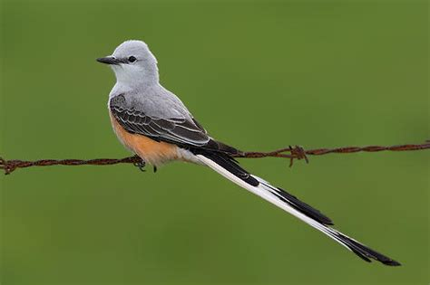 birds of arkansas audubon arkansas