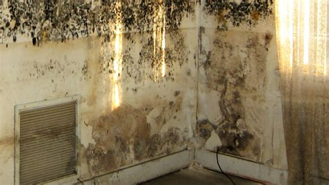 mold growth in bathroom brown fungus bathroom brightpulse us