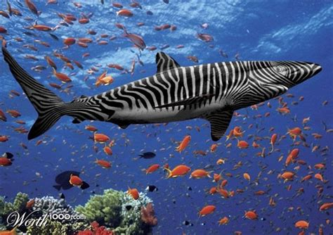 Zebra Shark | Animal Wildlife