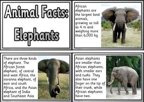 printable animal fact cards free animal facts printable flashcards or posters