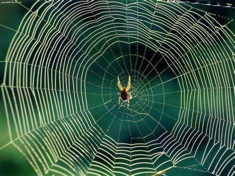 spiders web spider silk bca chemistry