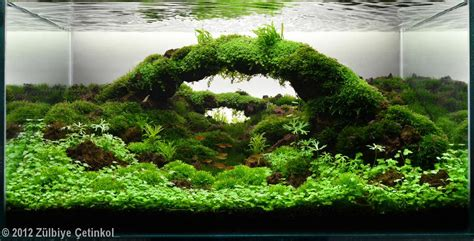 aquascape pictures 2012 aga aquascaping contest 77