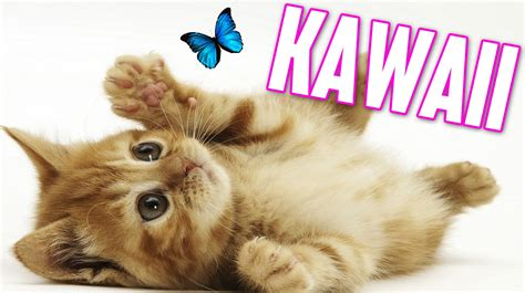imagenes kawaii gatitos simulador de gatito kawaii youtube