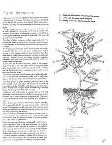 plant hormones worksheet auxin lesson plans worksheets reviewed by teachers