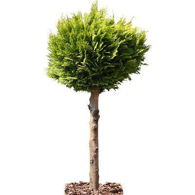 decorative trees texture tif tree trees decorative