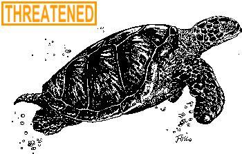 ct boating license age deep atlantic green sea turtle fact sheet