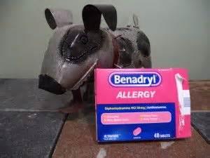 liquid benadryl for dogs the world s catalog of ideas