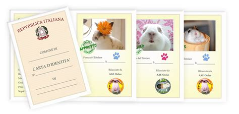 animal shelter cage card template resources for animal shelters house rabbit society