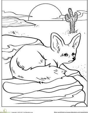 desert fox coloring page color the desert fox coloring page education com