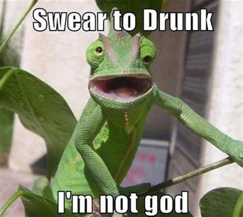 funny alcohol pictures