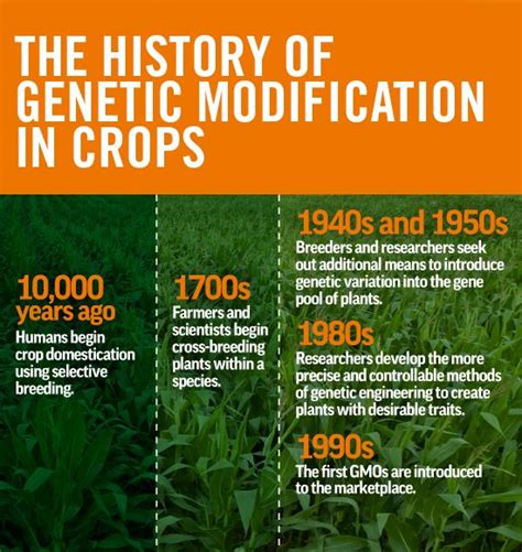 Genetic Modification Dictionary by The History Of Genetic Modification In Crops Gmo Basics