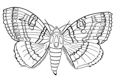 rainforest butterfly coloring pages free coloring pages of jungle insects