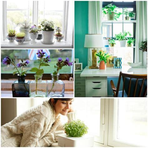 fensterbank deko mit pflanzen die einen kleinen garten - Fensterbrett Garten