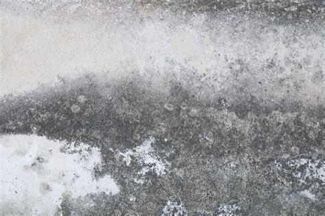 white mold on concrete wall can mold grow on concrete polygon