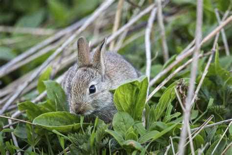 gnats in backyard garden plot varmints gnats rabbits and chipmunks wtop