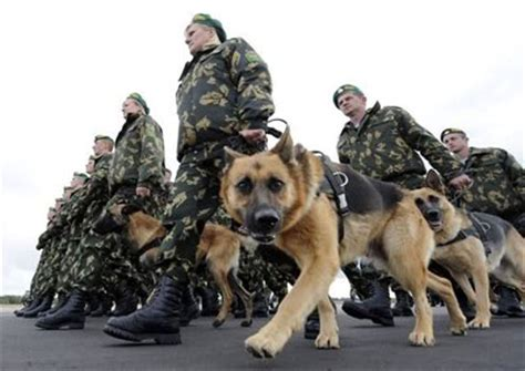 war dogs real guys army dogs on working dogs working dogs and dogs