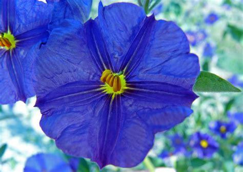 fiore immagini un fiore foto immagini macro e up macro