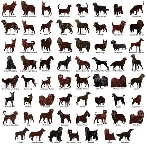 names of dogs types of dogs breeds names and images litle pups