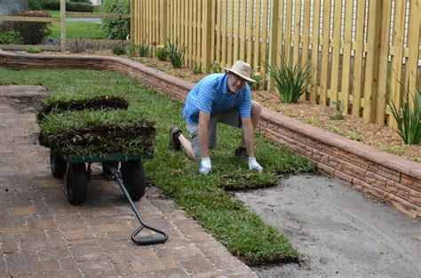 sod cost home depot 28 images image gallery laying sod