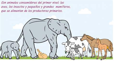 cadena alimenticia jirafa consumidores primarios los herb 237 voros edicion impresa