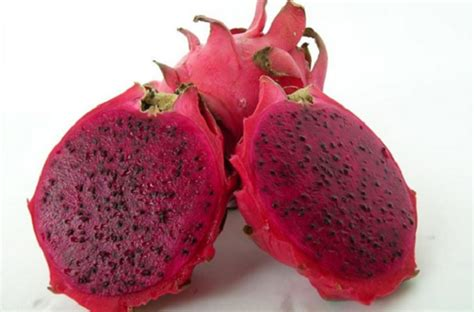 Teh Buah Naga cara menanam buah naga agar cepat berbuah