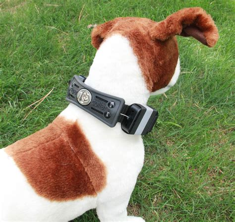 collars reviews staff reviews retractable leash collars baxterboo